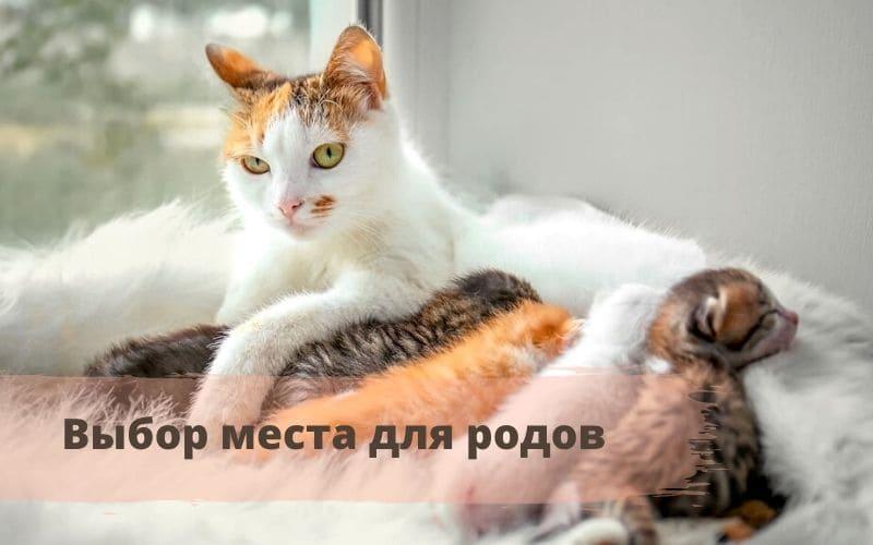 дата родов кошки