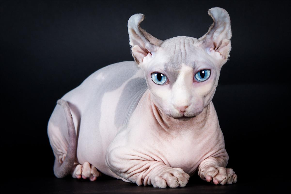Здоровье кошек Эльф