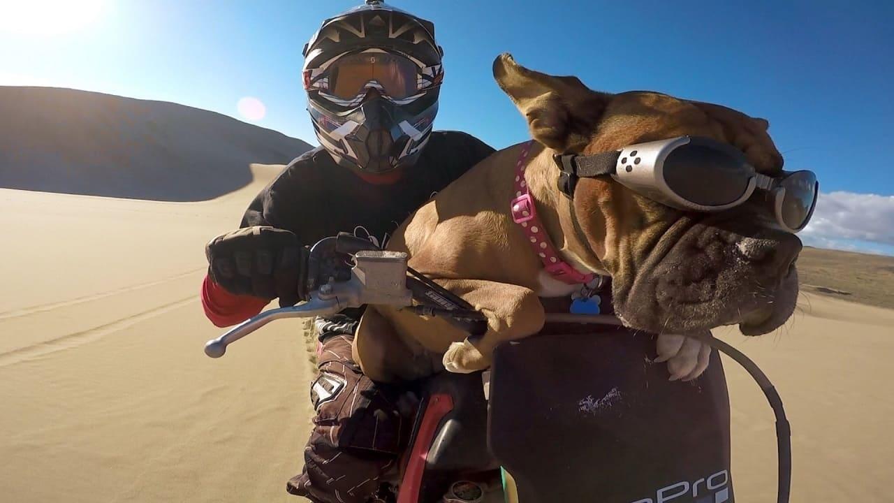 Путешествие с собакой на мотоцикле