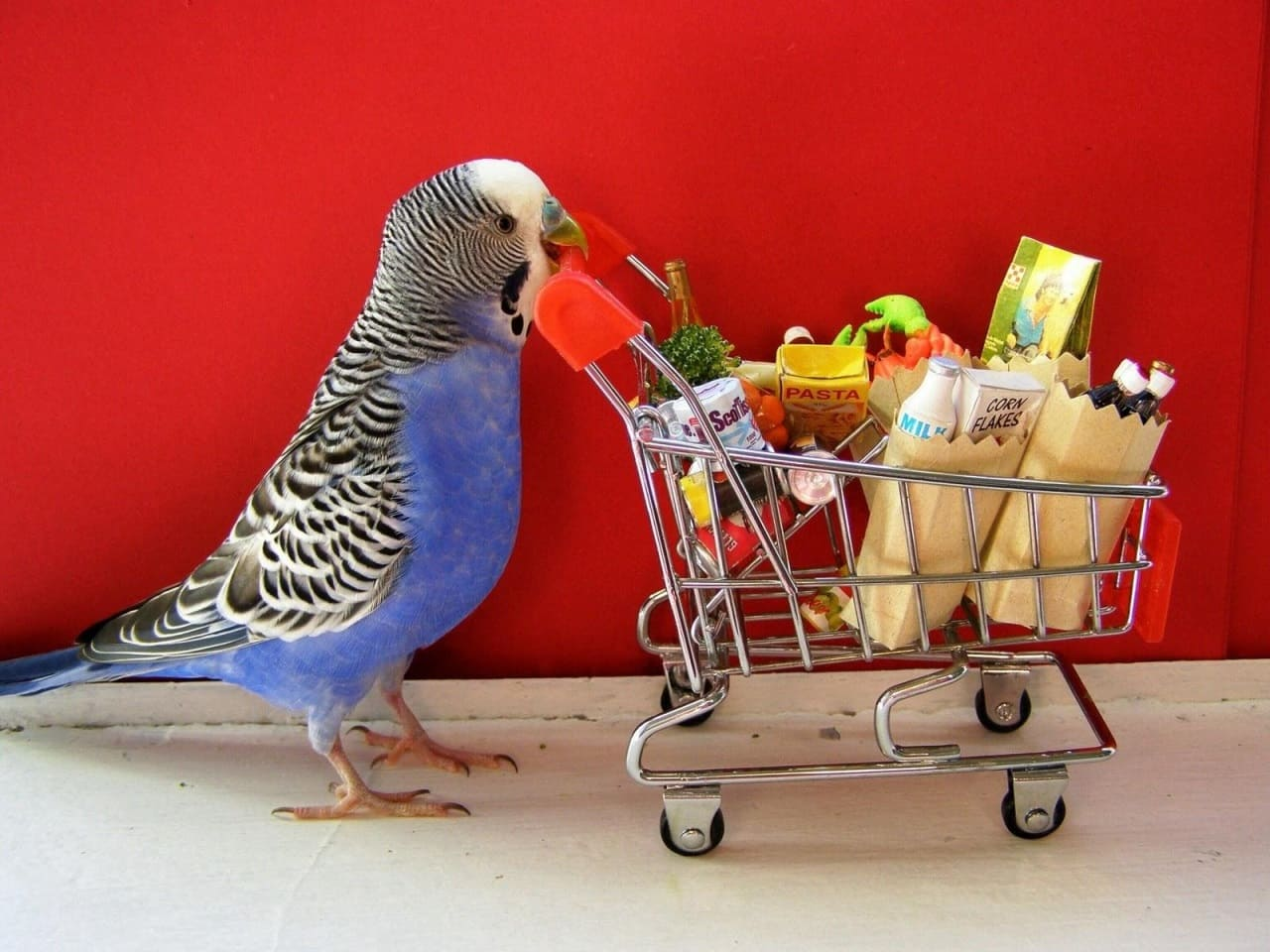 Какой корм подойдет для волнистых попугаев