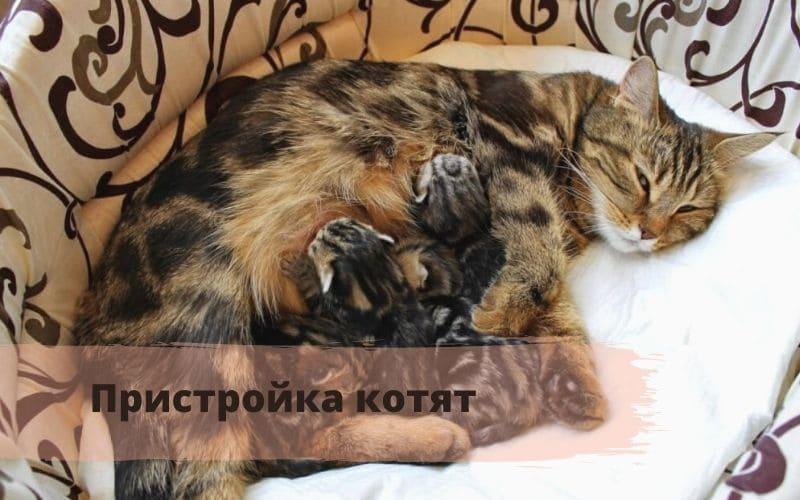 сколько длятся роды у кошек