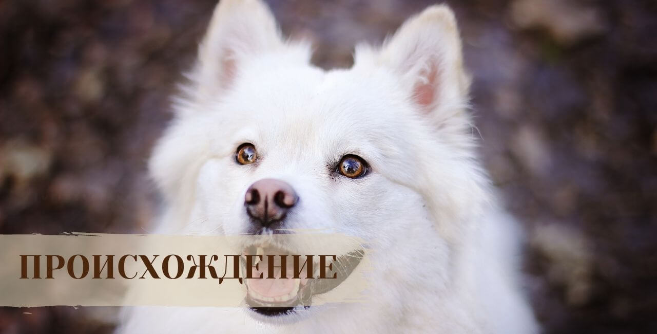 История Самоедской собаки