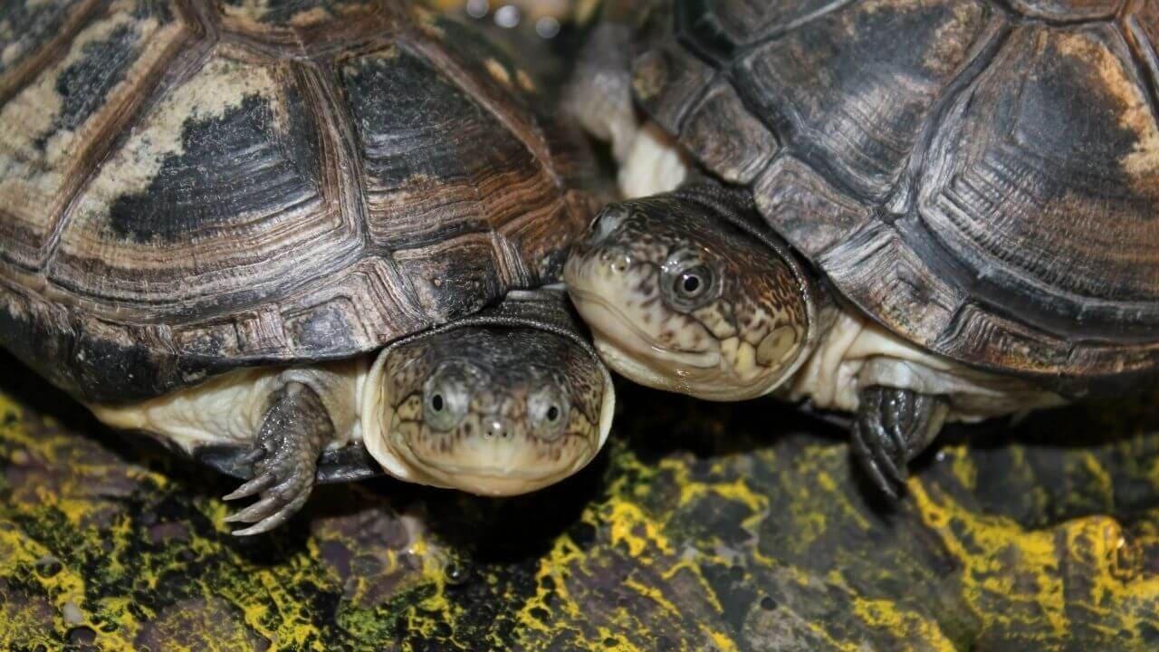 Заболевания желудочного тракта у черепах