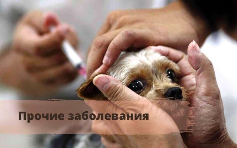 как подготовить собаку к вакцинации