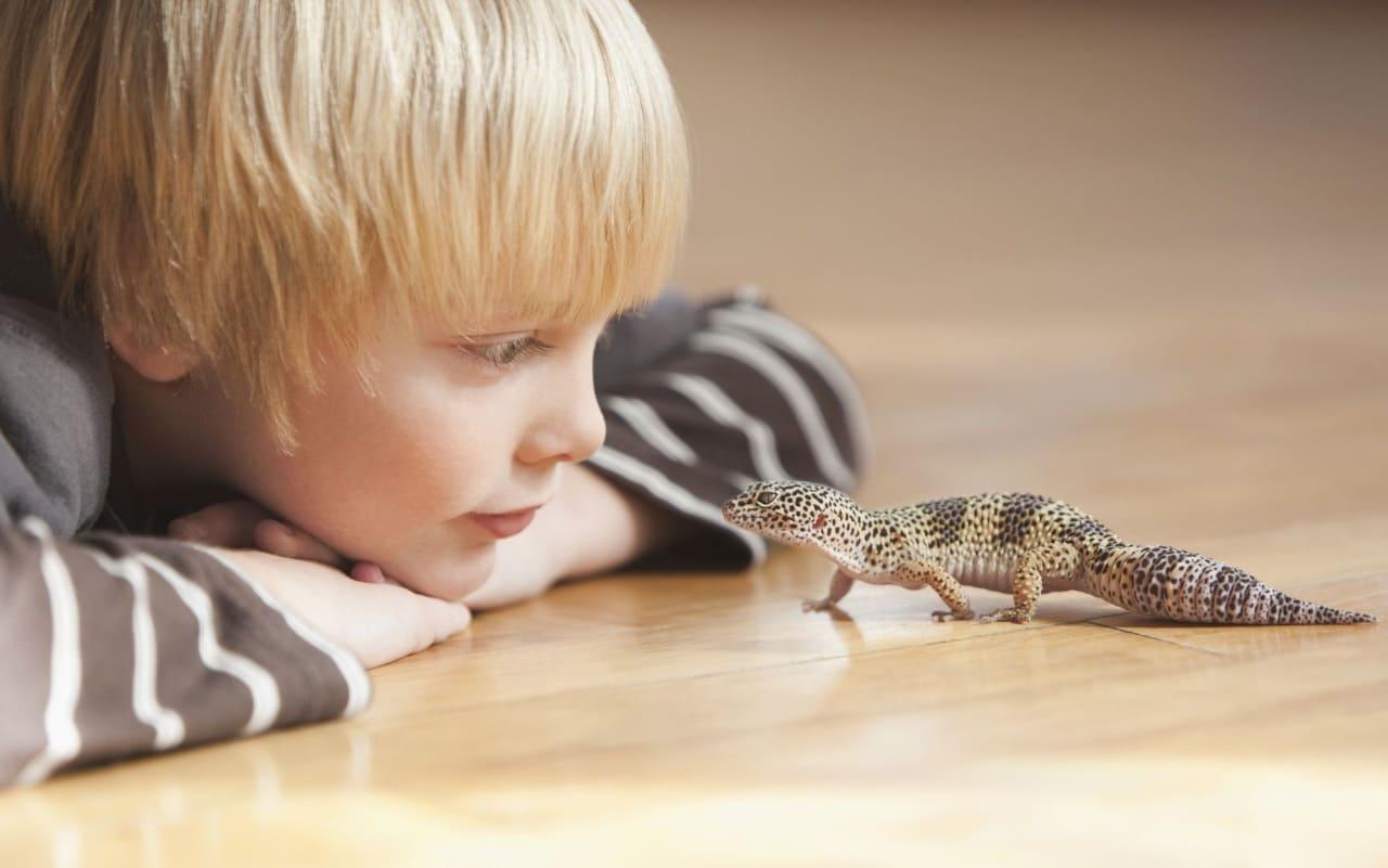 Как заботиться о рептилиях