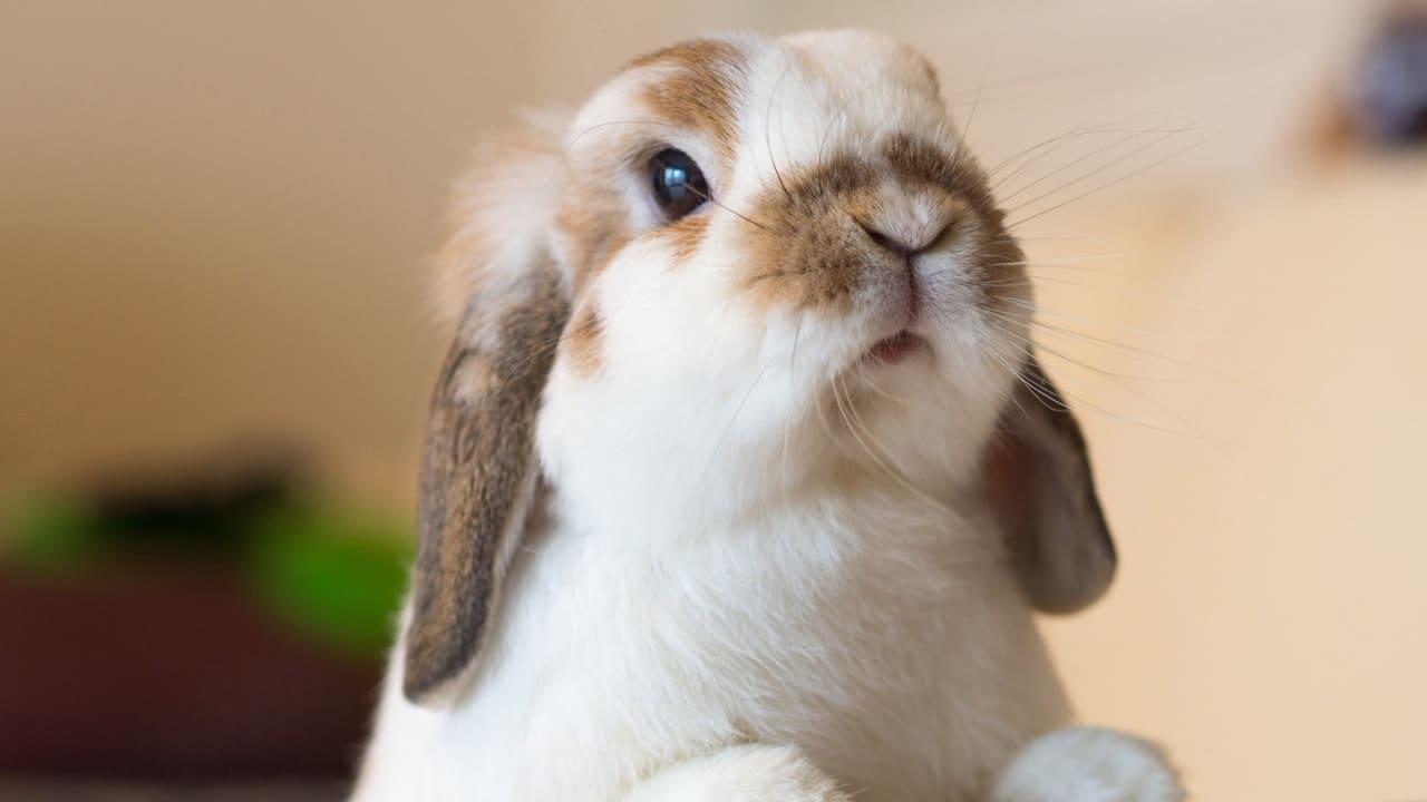 Выбор породы кроликов