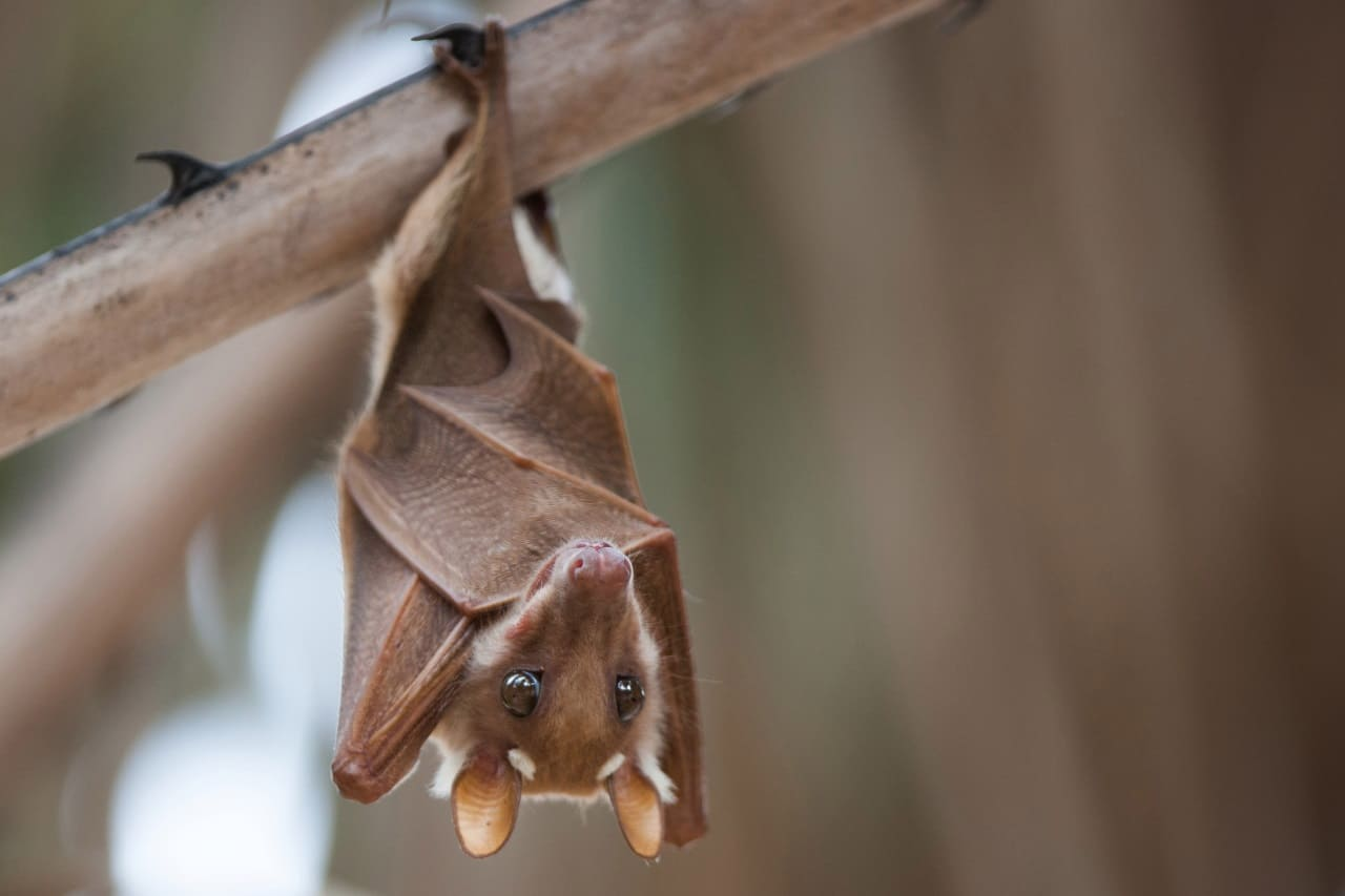 Спячка летучих мышей