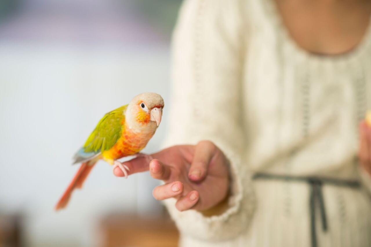 Полезные советы как научить попугая разговаривать