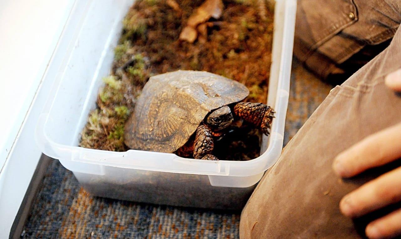 Условия для спячки черепах