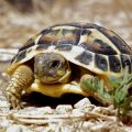 Сухопутные черепахи дома
