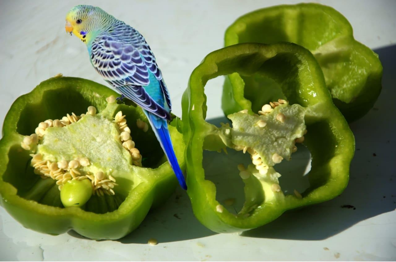 Овощи для волнистых попугаев