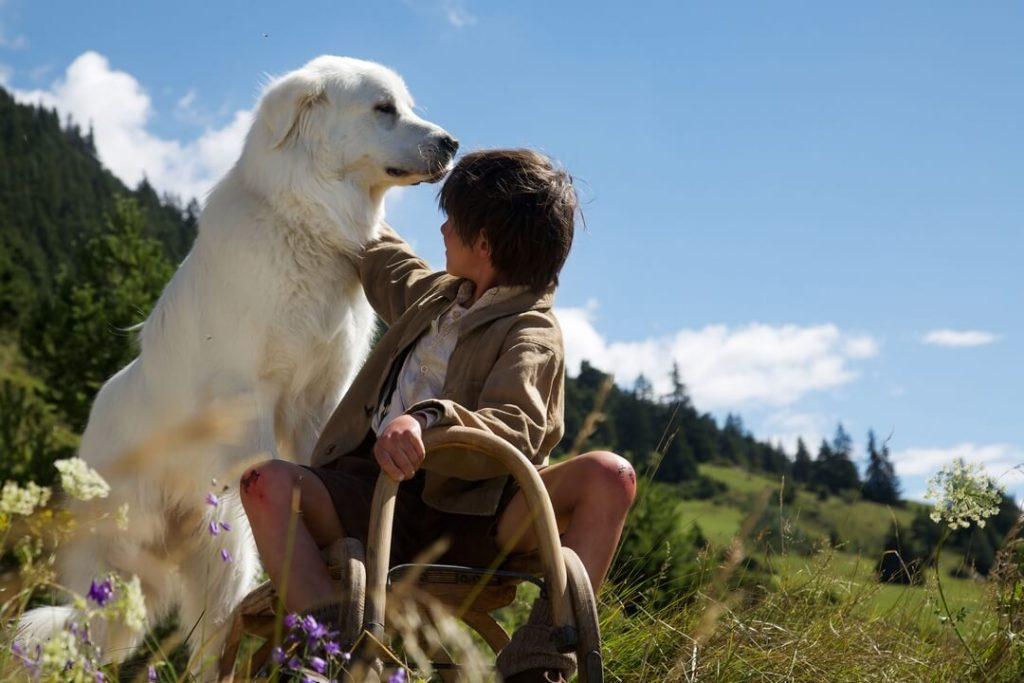 Дрессировка пиренейской собаки