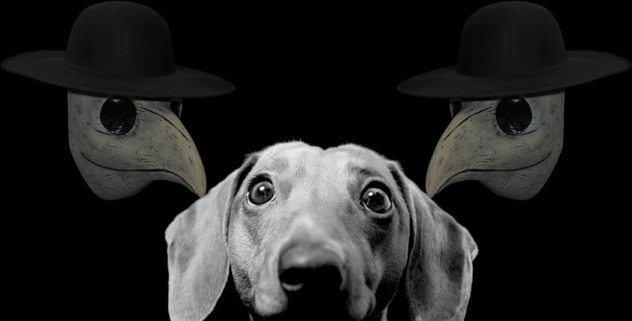 Чумка у собак - симптомы, признаки, лечение