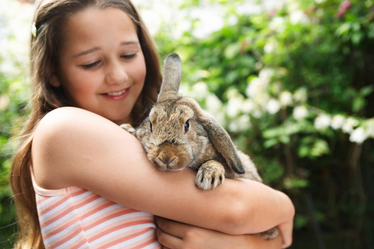 Как носить кроликов на руках