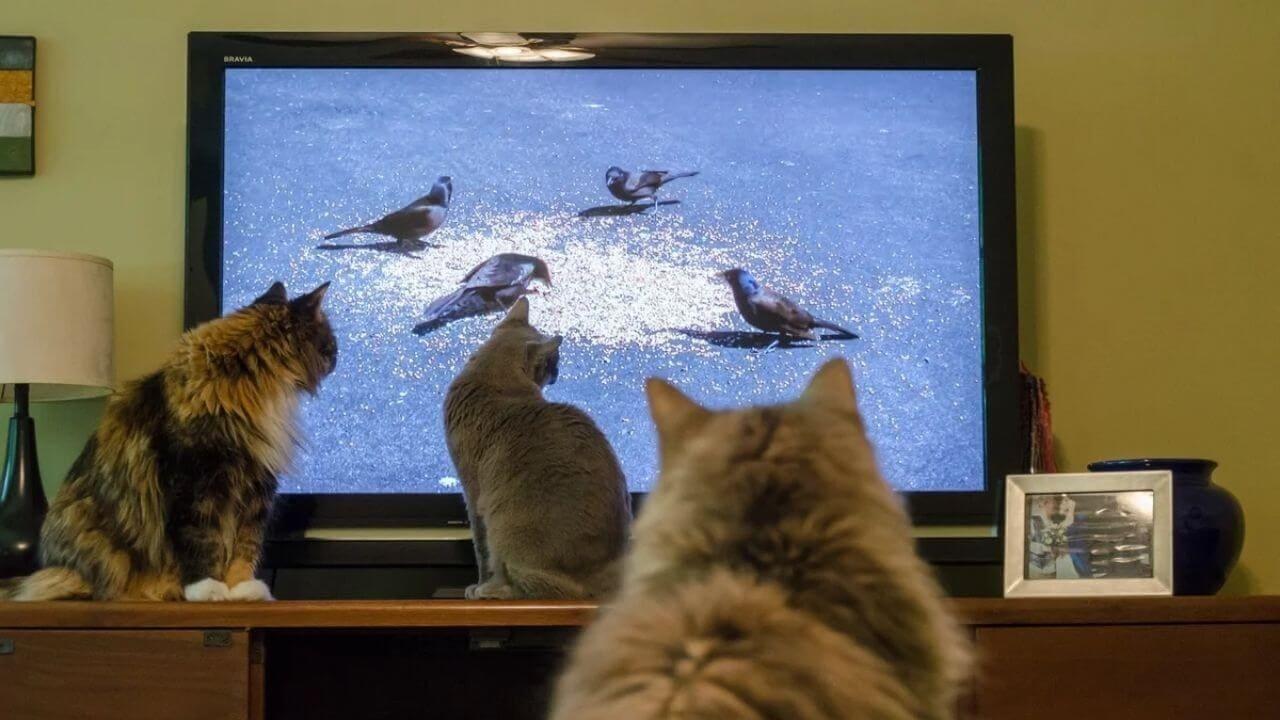 Почему коты смотрят телевизор