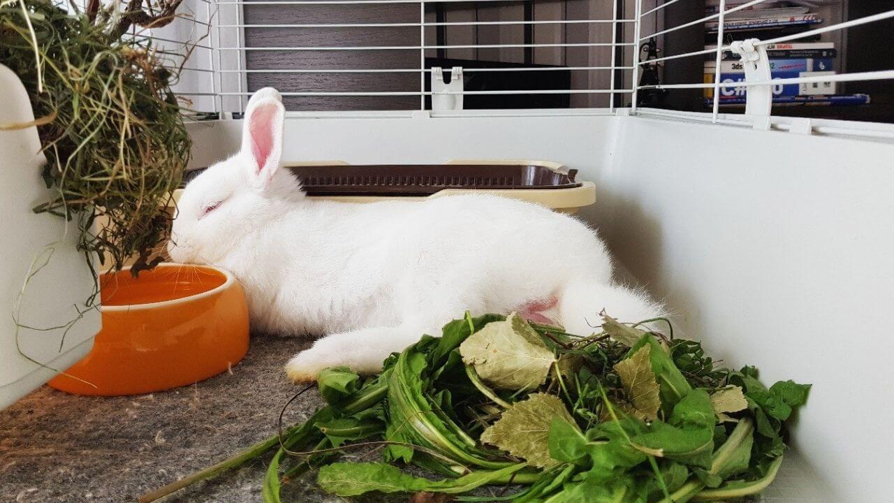 Где поставить клетку с кроликом
