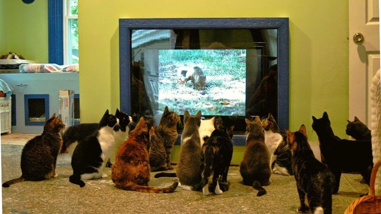 Почему кошка смотрит телевизор