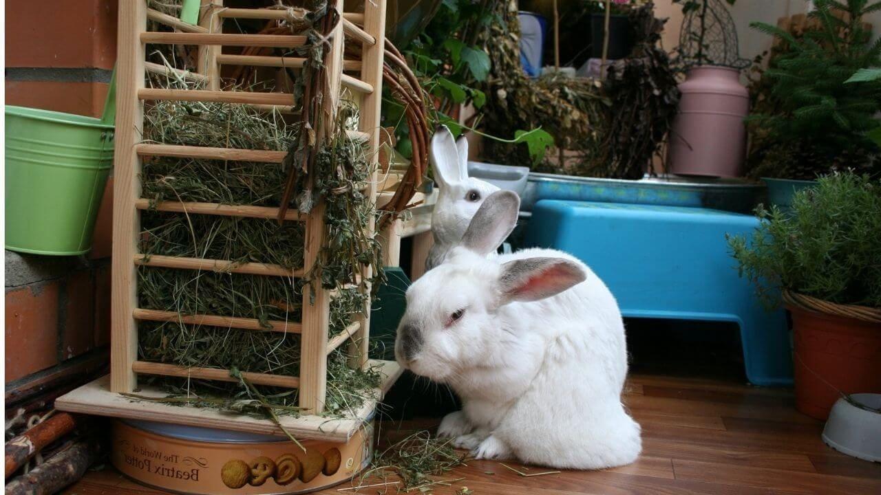 Какая должна быть клетка у кролика