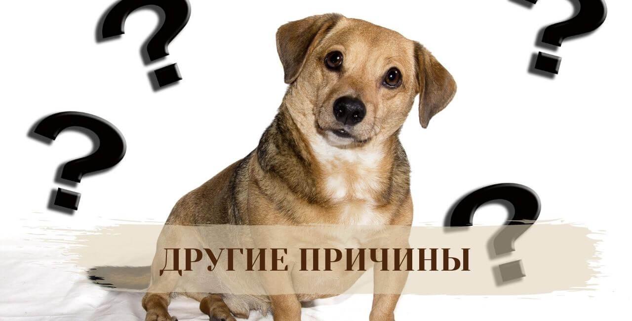 Другие причины, почему собака катается на попе