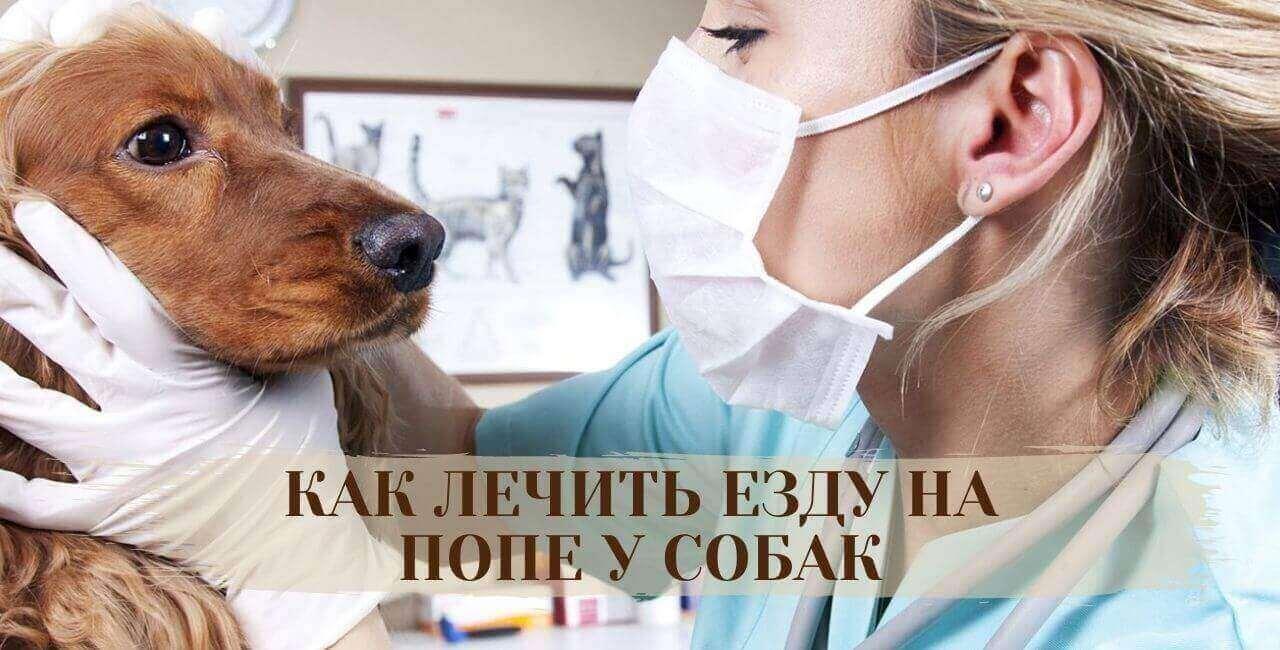 Как лечить езду на попе у собак