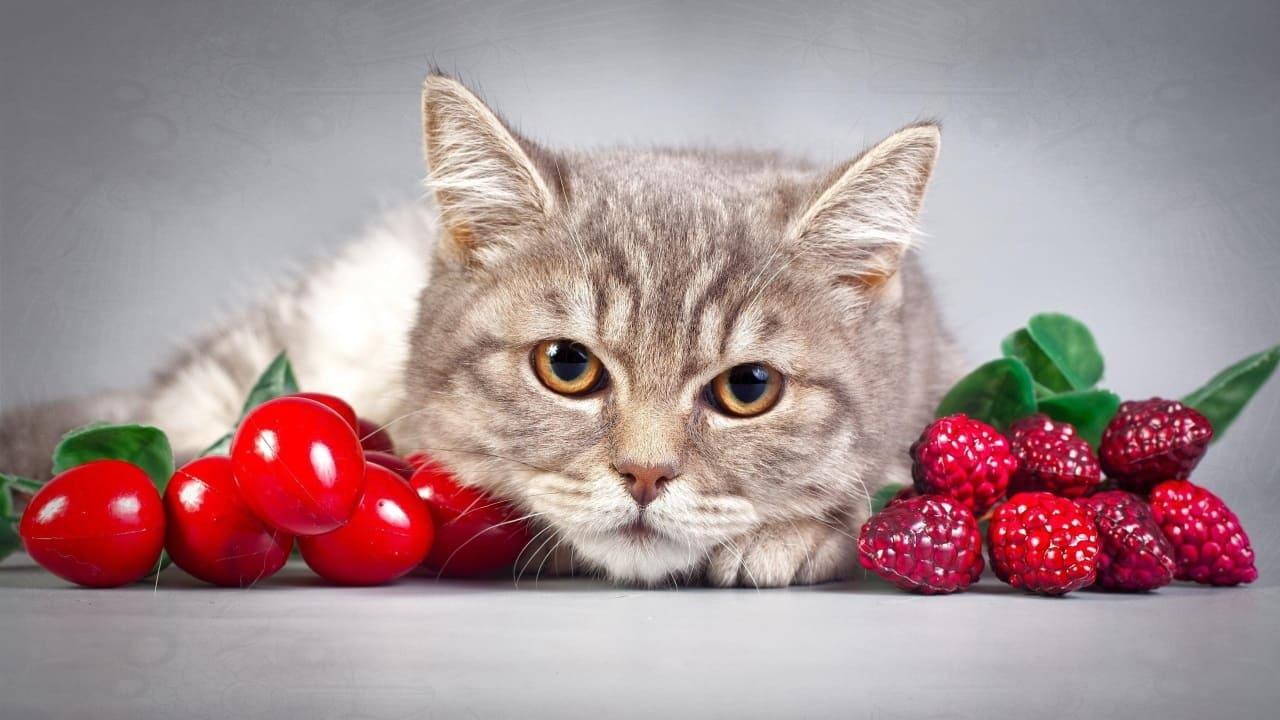 Кошкам нельзя фрукты