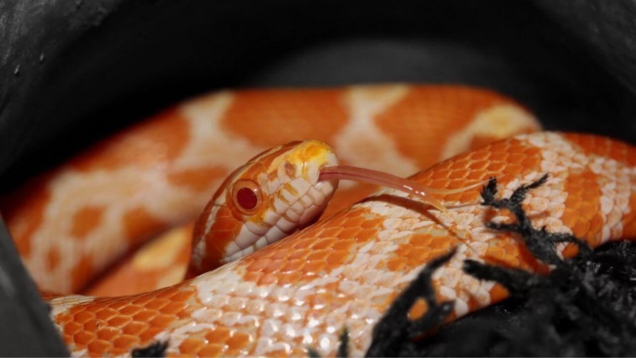 Террариум для змеи