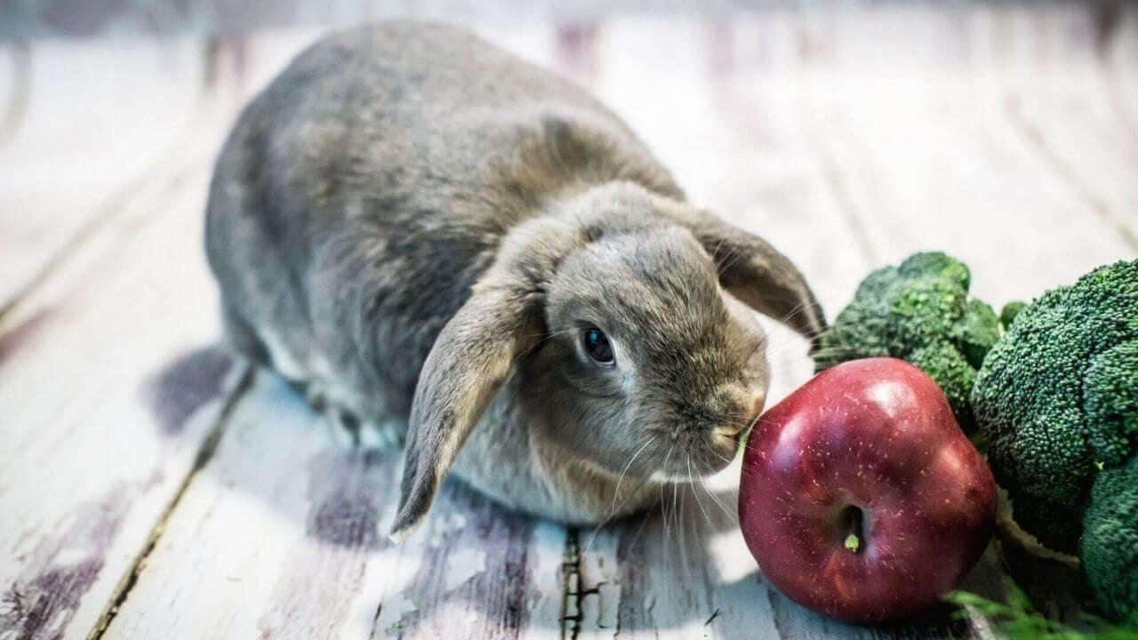 Что можно давать декоративным кроликам