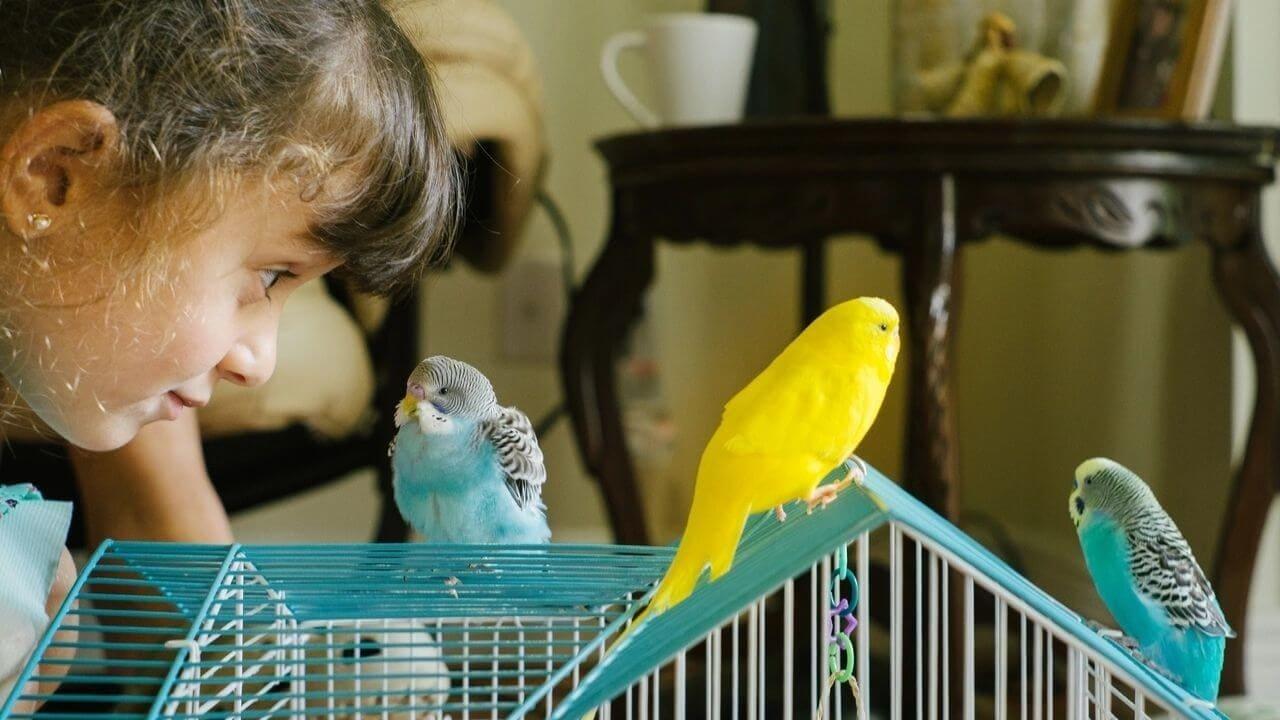 Общение с попугаем