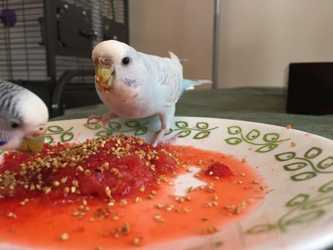 Оригинальные угощения для волнистых попугаев