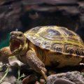 Как зимует черепаха в квартире