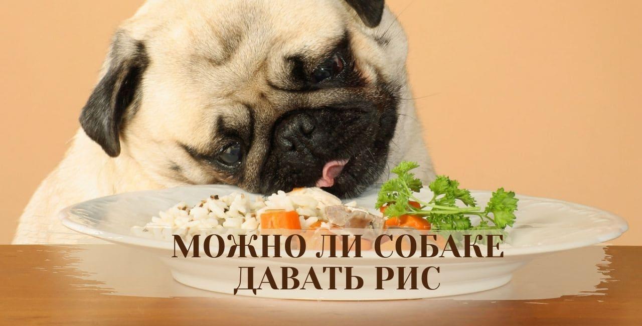 Можно ли собаке давать рис