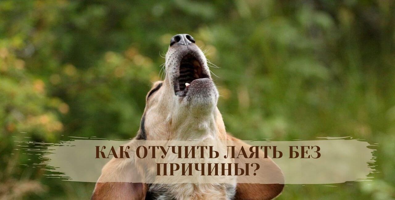 Как отучить лаять в доме собаку