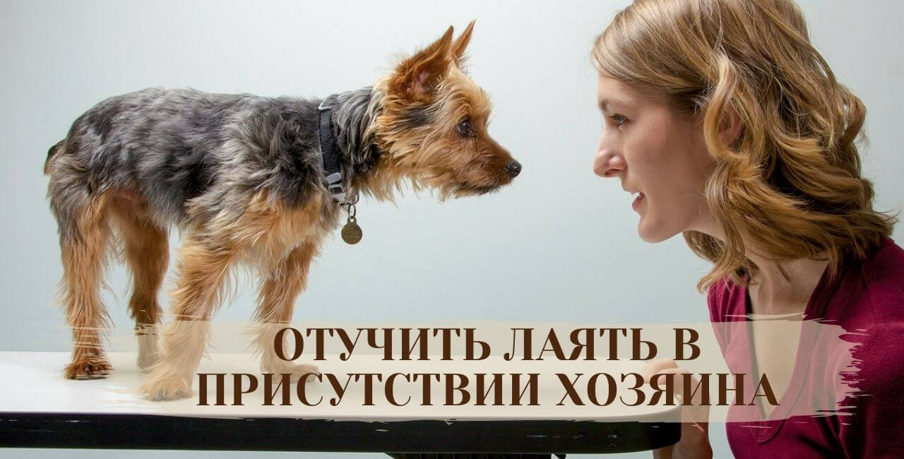 Как отучить лаять собаку в присутствии хозяина