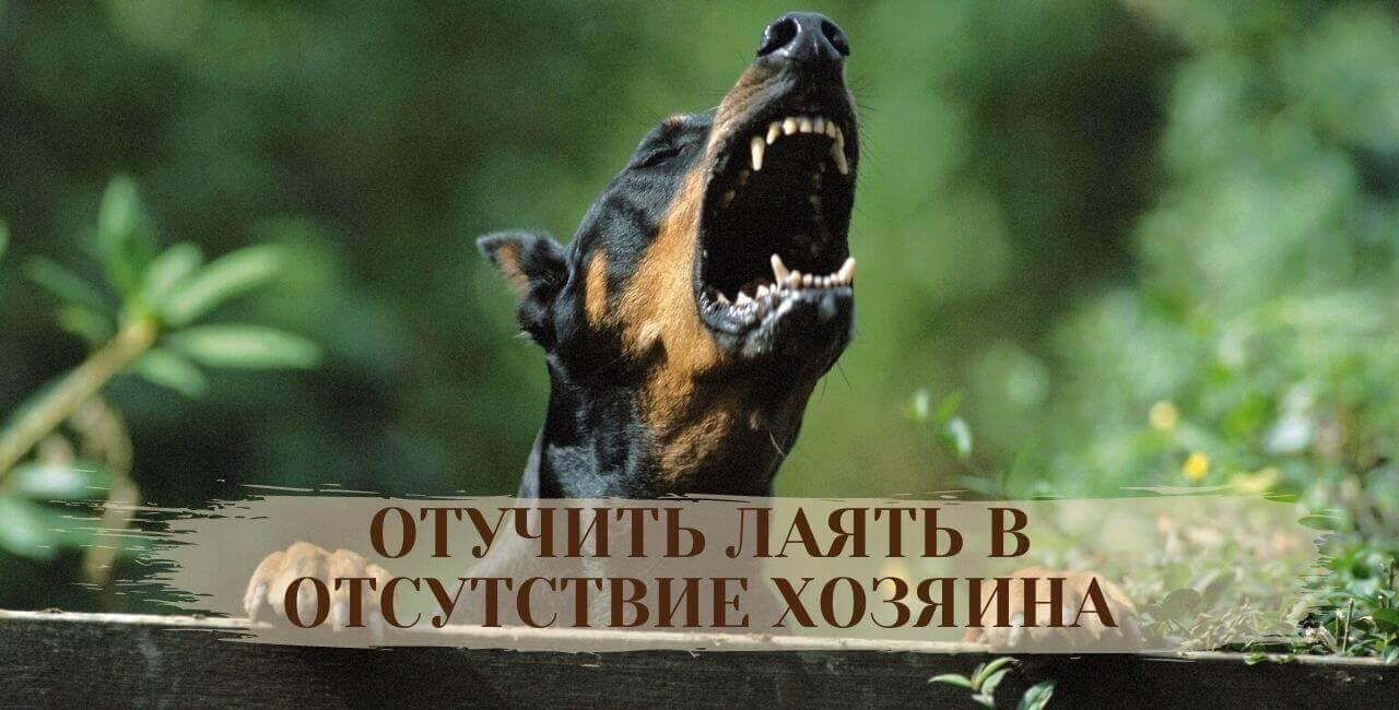 Как отучить лаять собаку в отсутствие хозяина