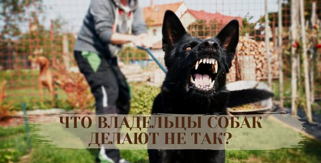 Ошибки в отучивании собак от лая