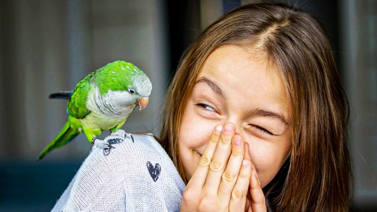 Попугай умеет говорить