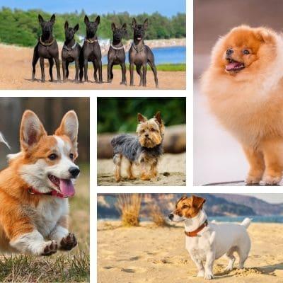 Маленькие породы собак фото