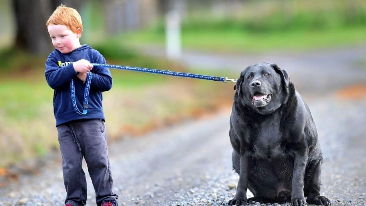 Зависимость ожирения от породы собак