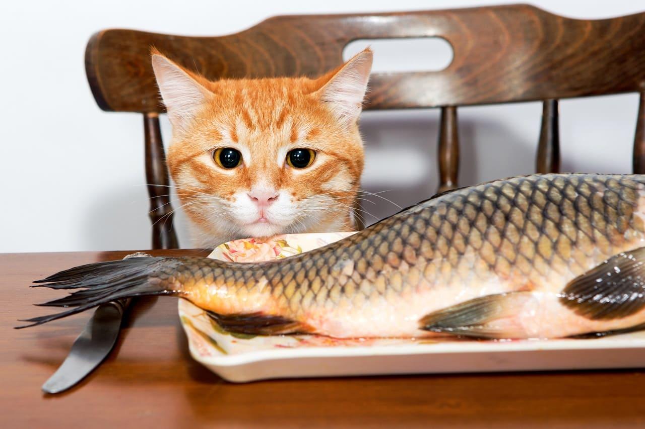Сырая рыба для кошки