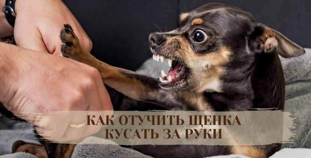 Отучить щенка кусать руки и ноги