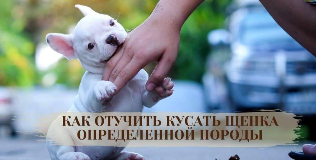 Как отучить щенка стаффа кусать руки