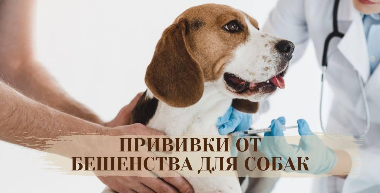 Прививка от бешенства для собак