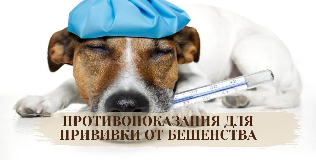 Противопоказания к прививке от бешенства для собак