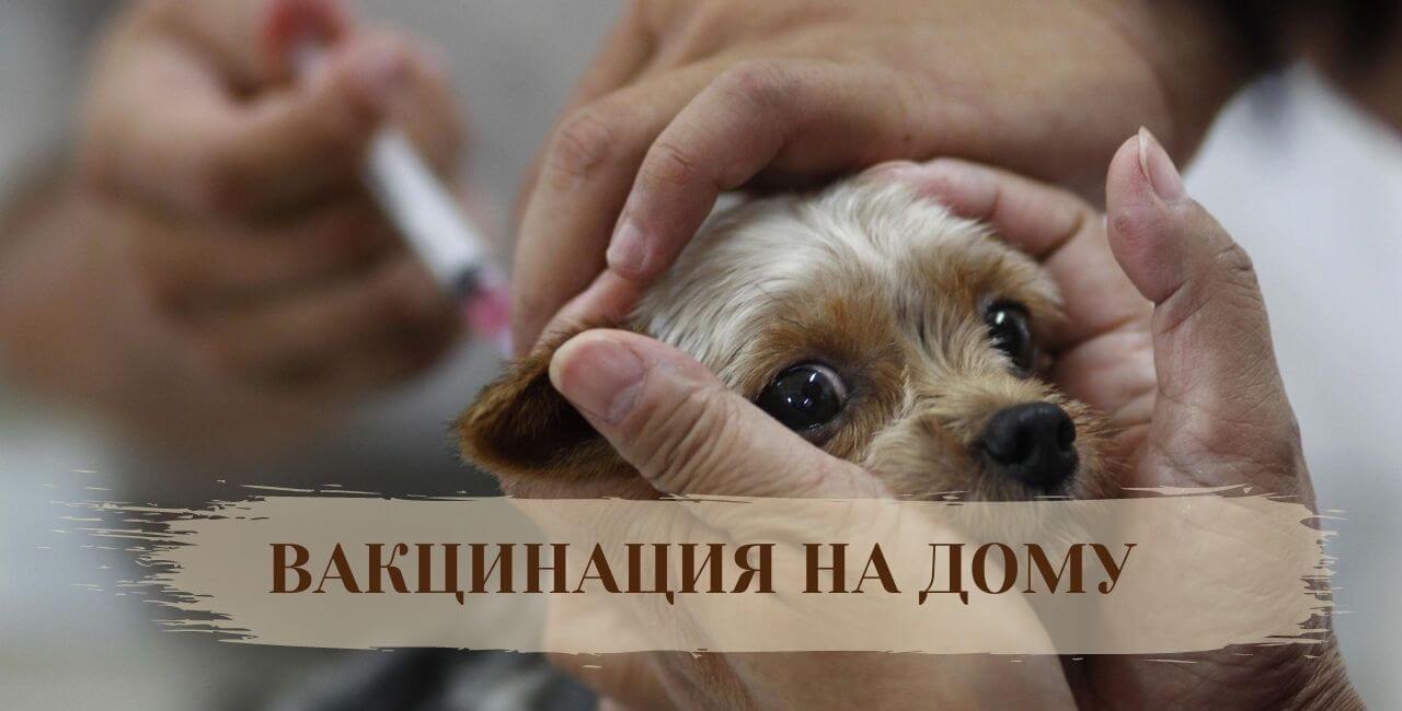 Прививка от бешенства для собак на дому