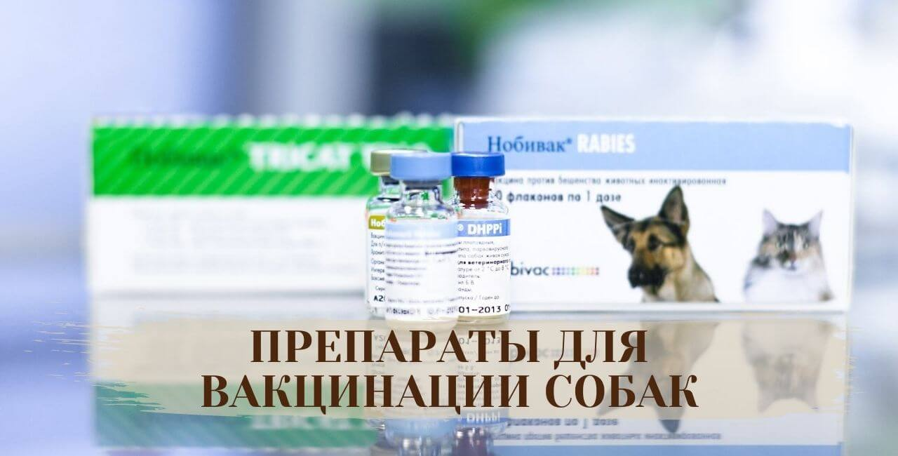 Препараты для прививки от бешенства для собак