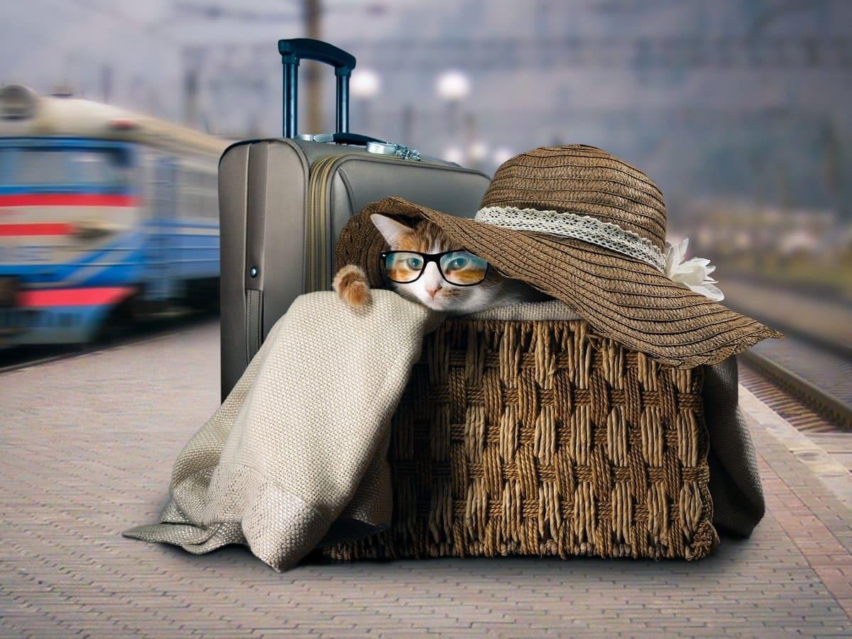 Поездка с домашними животными