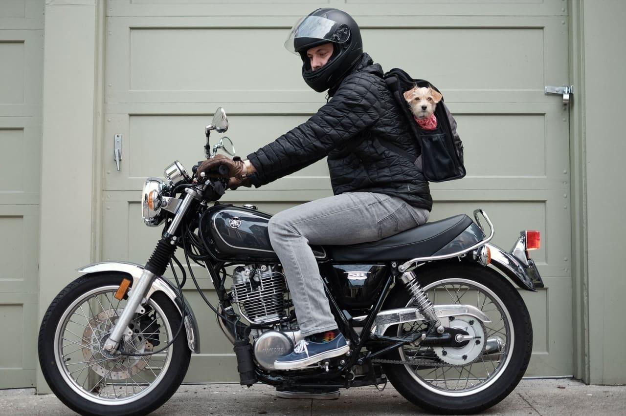 Рюкзак для поездок с собакой
