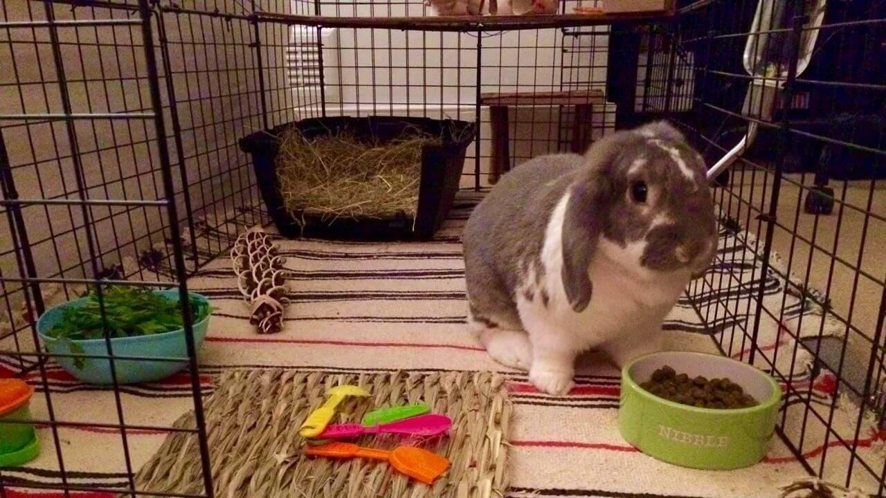 Что должно быть в клетке кролика