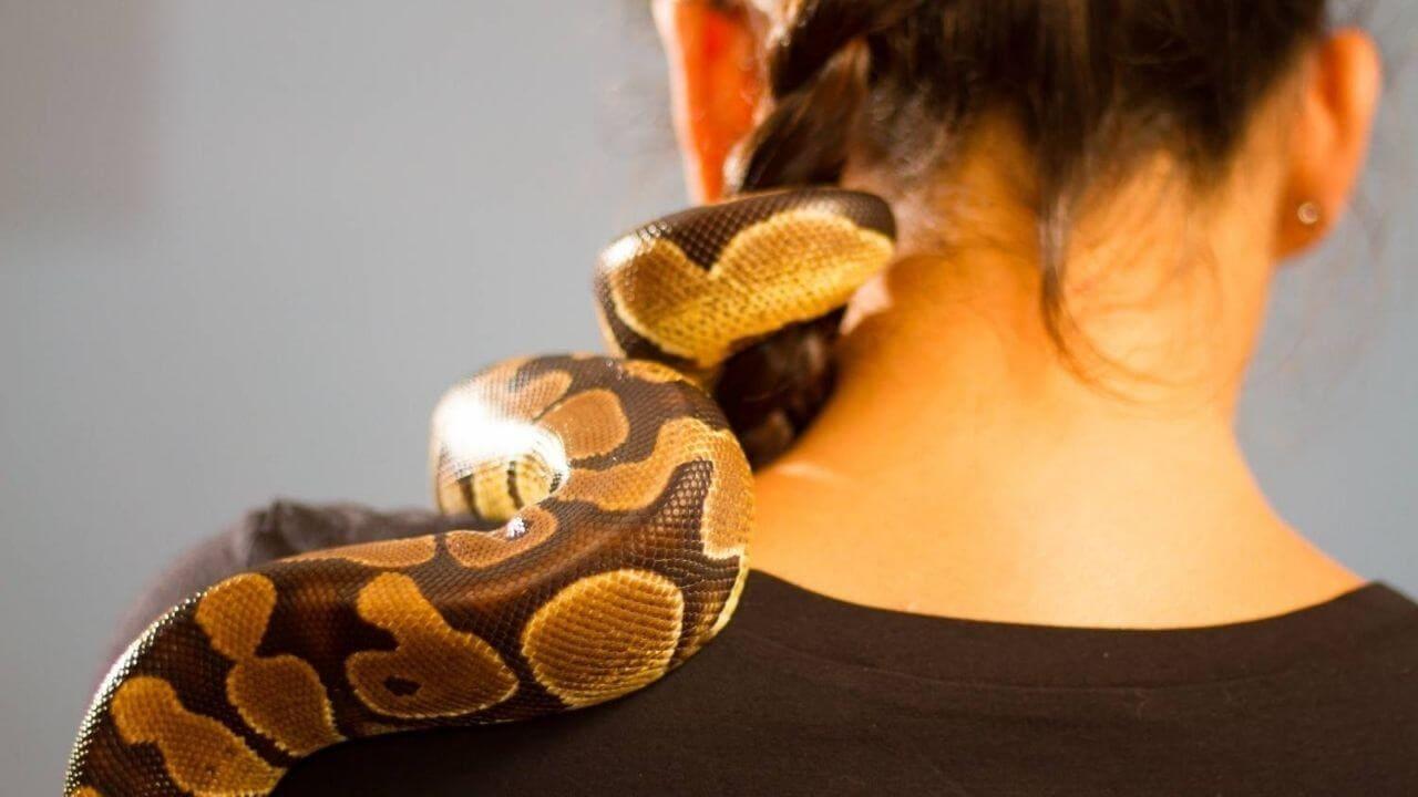 Разведение змей для начинающих