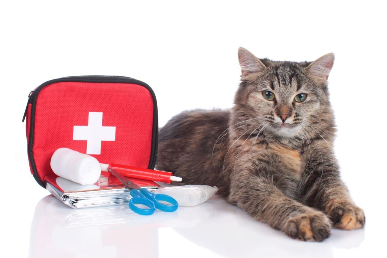 Правила подготовки ветеринарной аптечки